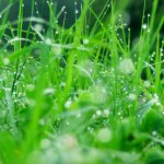 25 HD Green Landscape Wallpapers for Windows 10